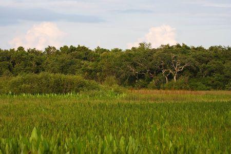 freshwater: Freshwater Prairie, Florida Everglades