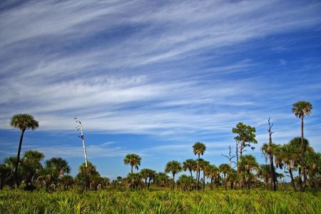 Big Cypress Landscape, Florida Everglades Stock Photo