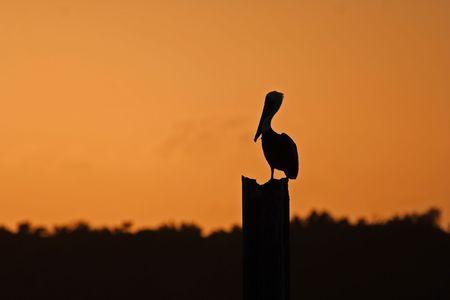 Silueta de pel�canos, el Parque Nacional Biscayne