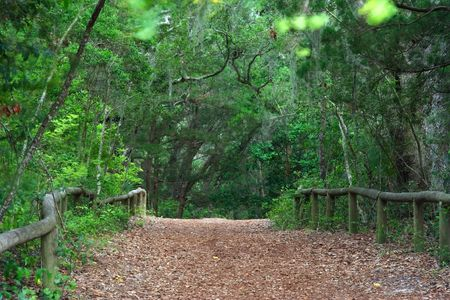 clinch: The old military road leading from Fort Clinch, Fort Clinch State Park, Florida