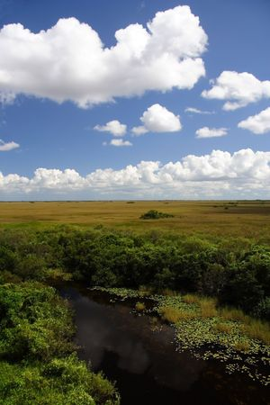 Scenic view of the Florida Everglades, Shark Valley Stock Photo - 7451616