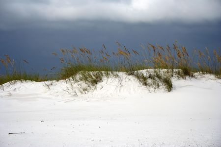 Sea Oats dot the landscape in Gulf Islands National Seashore, Pensacola, Florida Stock Photo - 7451619