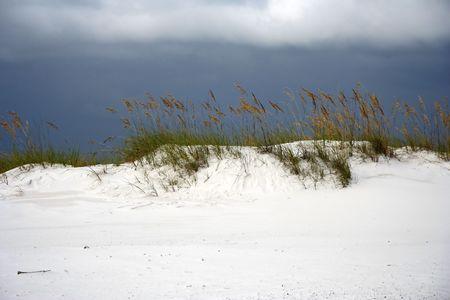 Sea Oats dot the landscape in Gulf Islands National Seashore, Pensacola, Florida Stock Photo - 7451619