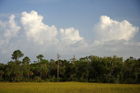 Scenic landscape in Big Cypress National Preserve Stock Photo - 7556437