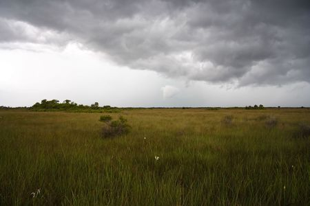 Dark clouds gather over the Everglades, Big Cypress National Preserve Stock Photo - 7556435