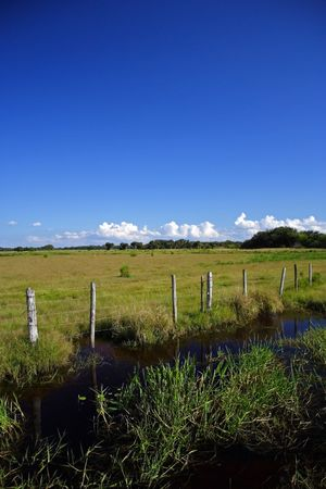 El campo de la Florida, �rea de manejo de vida silvestre de cena isla Ranch