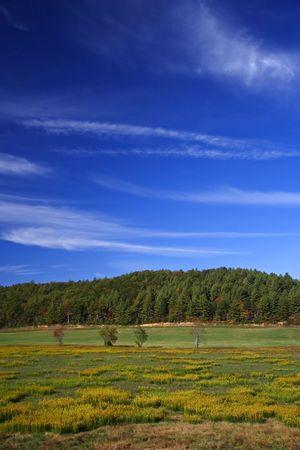 Buc�lico paisaje en los Apalaches de Georgia del Norte
