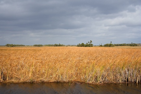swampland: Sawgrass Landscape in the Everglades