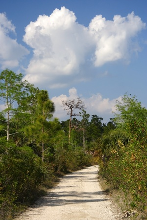 The Florida Trail, Big Cypress National Preserve photo