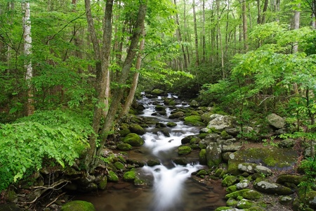 tennessee: Great Smokey Mountains National Park