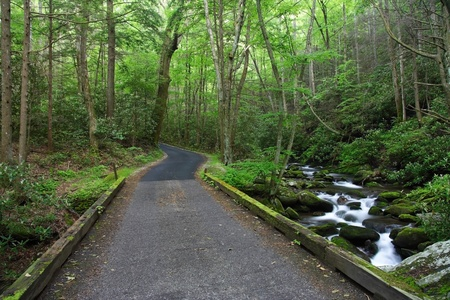 Roaring Fork Motor Nature Trail, Great Smokey Mountains National Park photo