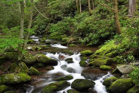 Peque�as cascadas, Parque Nacional Great Smokey, Tennessee