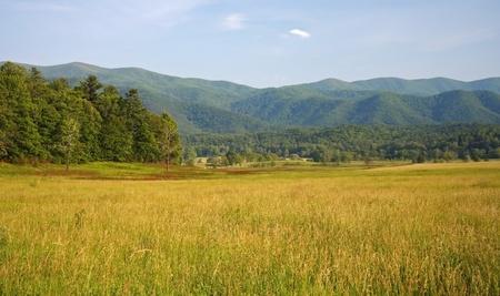 Meadows &amp, Mountains