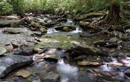 Scenic Creek in Great Smokey Mountains National Park