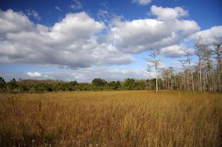 Everglades Paisaje en el Big Cypress National Preserve