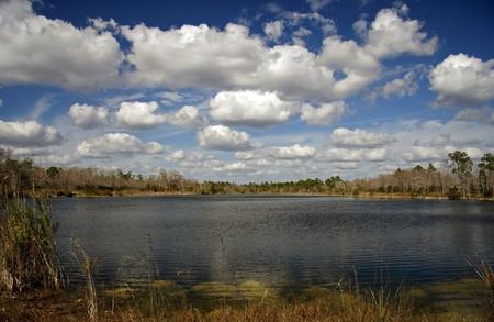 ekosistem: Burns Lake, Big Cypress National Preserve, Florida Everglades Stok Fotoğraf