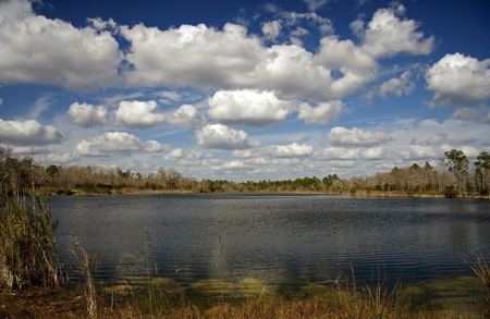 water ecosystem: Burns Lake, Big Cypress National Preserve, Florida Everglades Stock Photo