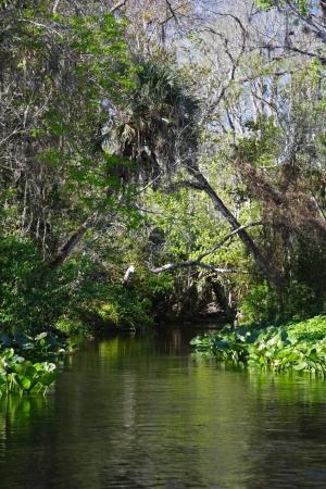 resortes: Resortes esc�nicos Rock Run cerca de Orlando, Florida