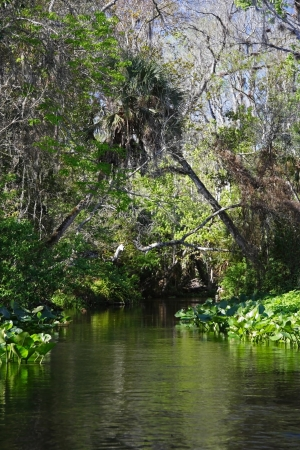 springs: Scenic Rock Springs Run near Orlando, Florida