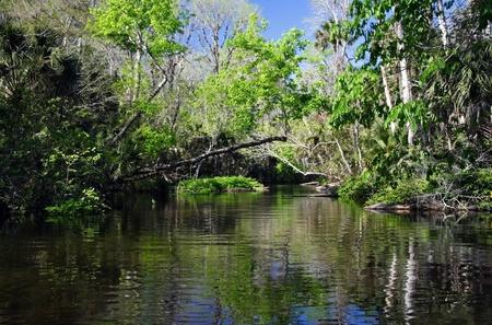 Scenic Rock Springs Run near Orlando, Florida