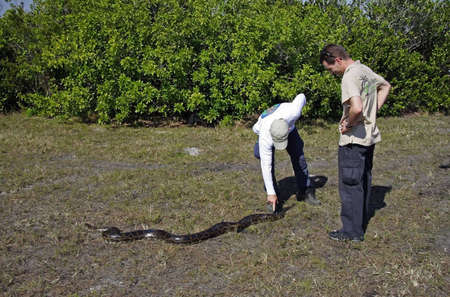 MIAMI, FL - JANUARY 22: Python hunter Edward Mercer (left) and a tourist stand over a large python shortly after it was captured along the Tamiami Trail January 22, 2012 in Miami, FL.