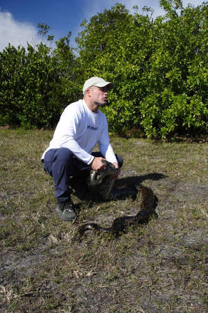 MIAMI, FL - JANUARY 22: Licensed python hunter Edward Mercer with a large python shortly after capturing it along the Tamiami Trail January 22, 2012 in Miami, FL.