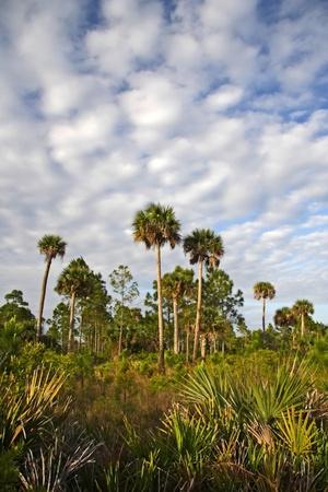 Scenic Landscape, Okaloacoochee Slough State Forest,