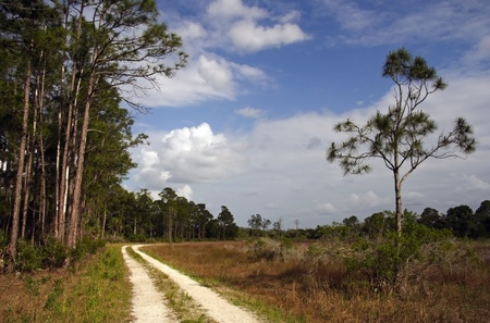Backcountry Trail, Okaloacoochee Slough State Forest, South Florida photo