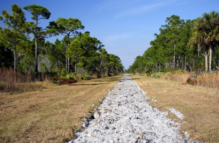 forest management: Fire barrier in DuPuis Management Area, South Florida Stock Photo