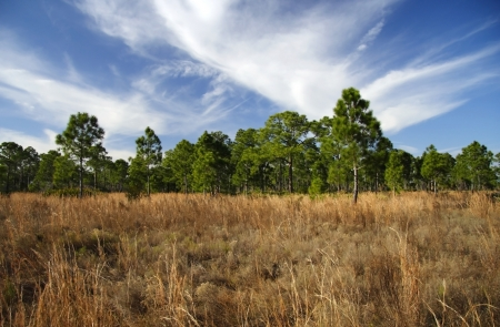 Scenic Landscape in DuPuis Management Area, South Florida Stock Photo