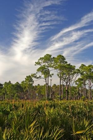 Scenic paisaje de la Florida en el �rea de Administraci�n DuPuis