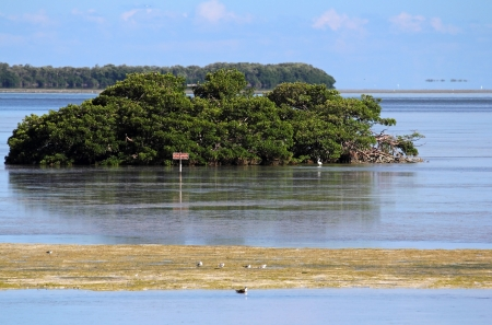 ft lauderdale: Protected Bird Nesting Area in Everglades National Park
