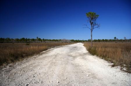 Monumento Road en Big Cypress National Preserve, Everglades de Florida Foto de archivo