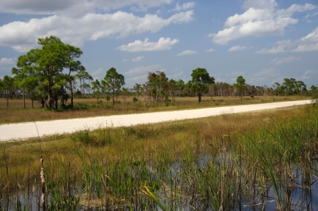 everglades national park: Turner River Road, Big Cypress National Preserve Stock Photo