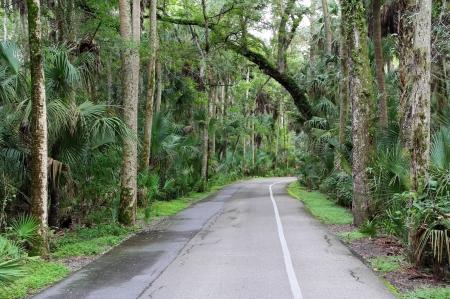 Highlands Hammock State Park Tour Auto Road, Florida Foto de archivo