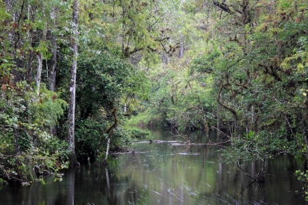 sweetwater: Beautiful Sweetwater Strand, Big Cypress National Preserve, Florida Everglades