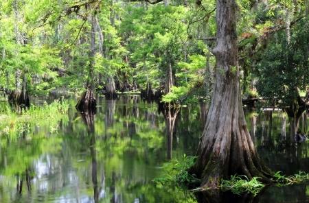 A Nature Scene along Fisheating Creek