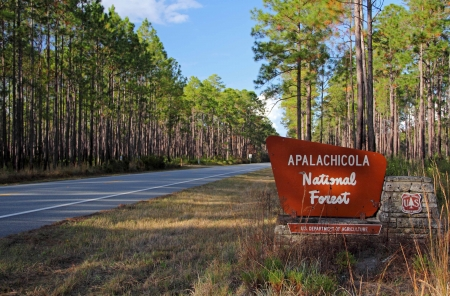 Entrance to the Apalachicola National Forest, Florida Panhandle