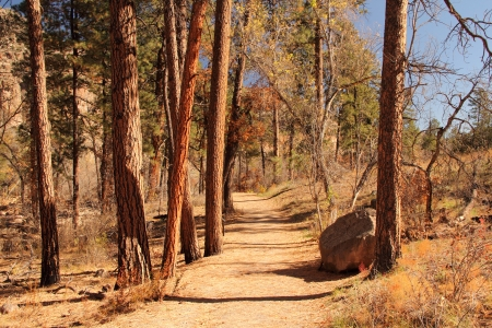 Hiking Trail in Bandelier National Monument