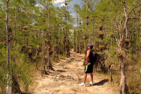 Big Cypress National Preserve, 17 de mayo 2014 - Caminante hace una pausa para disfrutar del paisaje a lo largo del rastro backcountry Skillet Strand en los Everglades de Florida. Editorial