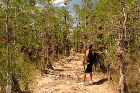 Big Cypress National Preserve, May 17, 2014 - Hiker pauses to take in the scenery along the Skillet Strand backcountry trail in the Florida Everglades.