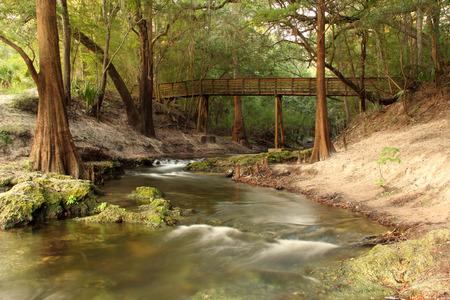 Lime Sink Run, Suwannee River State Park, Northern Florida
