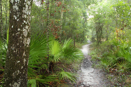 Trail along the Suwannee River in Suwannee River State Park in Northern Florida