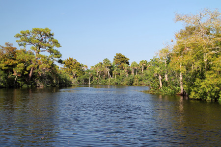 Paisaje subtropical del r�o Loxahatchee en Jonathan Dickinson State Park, Jupiter, Florida Foto de archivo