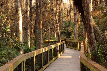 ft lauderdale: Scenic Boardwalk in Loxahatchee National Wilflide Refuge, Florida Everglades