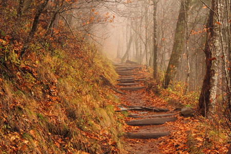 newfound gap: Applachian Trail on a foggy autumn day, Great Smokey Mountains National Park, Newfound Gap Stock Photo