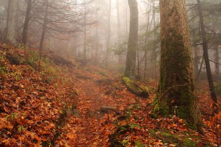 great smokies: Rainbow Falls Trail on a foggy autumn day, Great Smokey Mountains Stock Photo