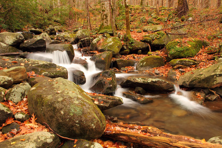 smokey: LeConte Creek, Great Smokey Mountains National Park, Tennessee