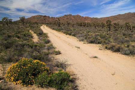 backcountry: Backcountry Road in the Mojave National Preserve, California