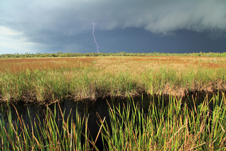 everglades: Summer Storm over Big Cypress in the Florida Everglades Stock Photo
